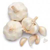 Lahsun / Garlic