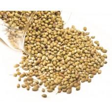 Coriander Seeds - Green